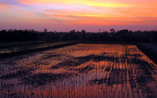 Spectacular sunsets over rice fields in Canggu. Image by Catriona Ward on Flickr.